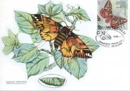 """3 CP D' Ukraine Avec Timbres Et Illust. """"Papillons"""" - Oblit. PJ 26.03.2004 - Papillons"""