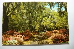 Orton Plantation Gardens - Wilmington
