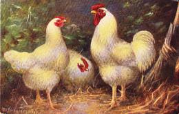 Poule Poulette Chicken Geflugel Weiße Wiandottes Bianca Signe Otto Fitrumann  Old  Cpa. - Vögel