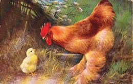 Poule Poulette Chicken Geflugel Gigant Cochin  Signe O.Ah.Mih  Old  Cpa. - Vögel