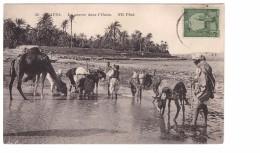 Tunisie Gafsa La Source Dans L' Oasis Petite Animation Ane Mule + Timbre - Tunisia
