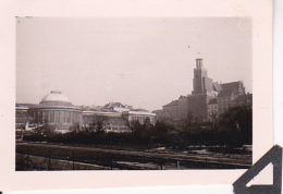 Foto Palmenhaus (?) - Perleberg - Ca. 1940 - 4*6 Cm (25476) - Orte