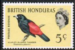 British Honduras SG206 1962 Birds 5c Mounted Mint [17/16081/1D] - British Honduras (...-1970)