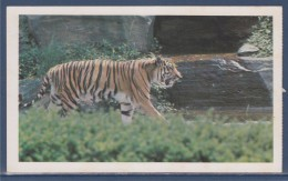 = Carte Postale Tigre, Safari Prisunic, Espèce De Mammifère Carnivore De La Famille Des Félidés - Rhinocéros
