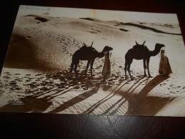 B663 Africa Dune Cammelli Cm9x14 Presenza Lievi Pieghe - Cartoline