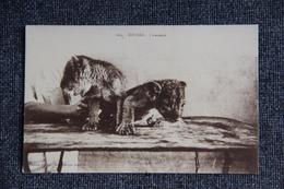 SOUDAN - Lionceaux. - Sudan