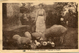 COCHON(TYPE LIMOUSIN) - Cochons