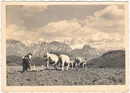 Gf. BOLZANO. Motivo Sul Renon Verso Il Catinaccio. 34966 - Bolzano (Bozen)