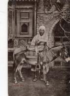 ANE(EGYPTE) - Burros