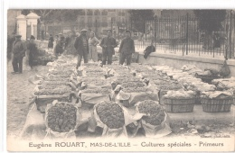 FR66 LE BARCARES - ROUART Eugène - Mas De Aille - Cultures Spéciales Primeurs - Jour De Marché - Comportes De Raisins - Port Barcares