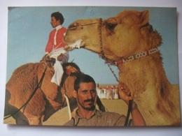 645A Postcard Saudi Arabia - After A Camel Race - Arabie Saoudite