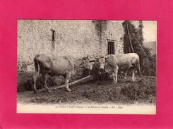 64 PYRENEES ATLANTIQUES, Scènes Et Types Basques, Le Retour à L'étable, (B. R.) - Cambo-les-Bains