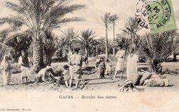 8674. CPA TUNISIE. GAFSA. RECOLTE DES DATTES. - Tunisie