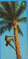 COTE D´IVOIRE IVOTY COAST RECOLTE DU VIN DE PALME  POSTCARD UNUSED ATIPYCAL 21cm X 10cm - Côte-d'Ivoire