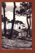 1 Cpa  COLONIE LES MOUETTES Les Goleands NOIRMOUTIER - Noirmoutier