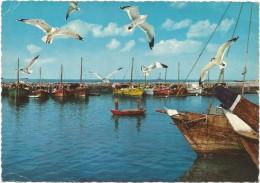 T119 Kuwait - Harbour Of Pearl Fishers - Barche Boats Bateaux / Non Viaggiata - Kuwait