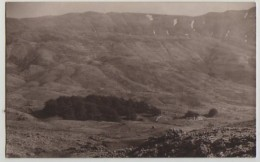 2 X  THE CEDAR GROVE & STONE PINES,LEBANON,c1920s, AMERICAN COLONY PHOTO CARD - Libanon