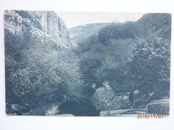 Postcard Palastine ( Israel? ) Wild Sweet Lemons At Ain Fara A Tributary Of Brook Cherith My Ref B1148 - Palestine