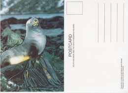 South Georgia Young Bull Fur Seal On Bird Island Postcard Unused (33342) - Falklandeilanden