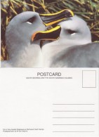 South Georgia Pair Of Grey-Headed Albatrosses On Bird Island Postcard Unused (33343) - Falklandeilanden