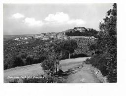 CASTAGNETO CARDUCCI PANORAMA  NV FG - Livorno