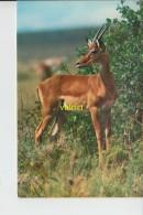 Gazelle - Animaux & Faune
