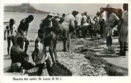 E-16-2459 : SHARLING THE CATCH SAINTE LUCIE - Sainte-Lucie