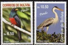 BOLIVIE / BOLIVIA 2007. Oiseaux Du Pando. Birds (2)