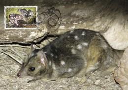 Australia 2016 Endangered Wildlife 50c Northern Quoll Maximum Card - Maximumkarten (MC)