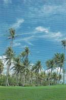 Micronesia Palm Trees - Micronesia