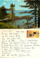 Pine Forest, Guernsey Postcard Posted 1979 Stamp - Guernsey