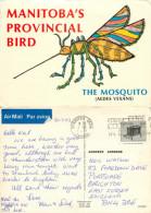 Mosquito, Manitoba, Canada Postcard Posted 1983 Stamp - Manitoba