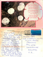 Sand Dollar, Florida, United States US Postcard Posted 2006 Stamp - Non Classés
