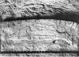 24 - Les Eyzies - Musée De Préhistoire -  Abri Du Poisson - Poisson Sculpté Sur La Voute - Art Préhistorique - Autres Communes
