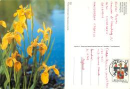 Irises, Belgium Postcard Posted 1992 Stamp - Belgium