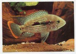 FISH / UNDERWATER ... - AK286720 Orangesaum-Buntbarsch - Poissons Et Crustacés