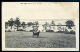 Cpa Etats Unis New Hampshire - Lake Wentworth And Copple Crown Wolfeboro   JIP46 - Etats-Unis