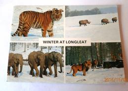 WARMINSTER WINTER AT LONGLEAT TIGRE RHINOCEROS ELEPHANTS LIONS - Angleterre