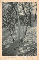 Cartolina - Postcard - Alberi Con Neve -  Poesia Frugoni - 1933 - Ohne Zuordnung