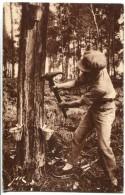 CAPBRETON (40) - Résinier - Saignée De L'arbre D'or - Gros Plan - Capbreton