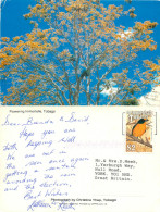 Flowering Immortelle, Tobago, Trinidad & Tobago Postcard Posted 1990 Stamp - Trinidad