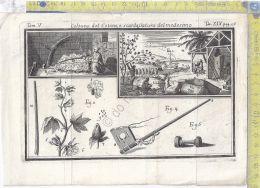 Litografia - Coltura Del Cotone E Scardassatura - Tav XIV  - .XIX  Secolo - Incisioni
