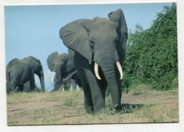ANIMAL - AK286782 Zaire - Elephants - Parc National De La Virunga - Kivu - Éléphants