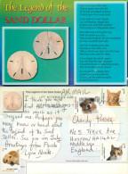Sand Dollar Shells, Florida, United States US Postcard Posted 2012 Stamp - Non Classés