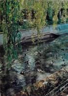 14 - BELLENGREVILLE En CALVADOS - Parc Zoologique - Canards D'ornement En Liberté. 1971 - Other Municipalities