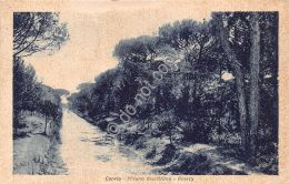 Cartolina - Postcard - Cervia - Pineta - 1948 (Ravenna) - Non Classificati