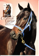Australia 2013 Maxicard Scott #3916 60c Black Caviar Undefeated Racehorse First Day Issue - Cartoline Maximum