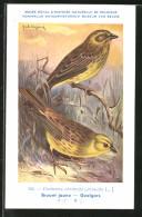 Künstler-AK Naturhist. Museum Von Belgien, Emberiza Citrinella, Goldammer - Pájaros
