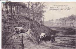 Cpa-22- Erquy --personnage , Vaches-plage De Lanruen Guenville-n°7945 - Erquy