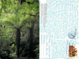 Tree Fern, New Zealand Postcard Posted 1995 Stamp - New Zealand